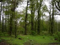 Wilde Laubmischwälder in Golestan